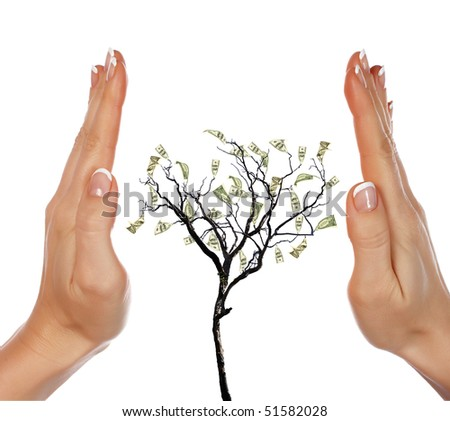 Hands and money tree - a symbol of investment in the future - stock photo