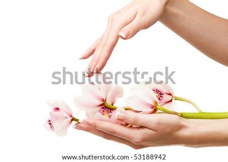 Hands and orchid over isolated white background - stock photo