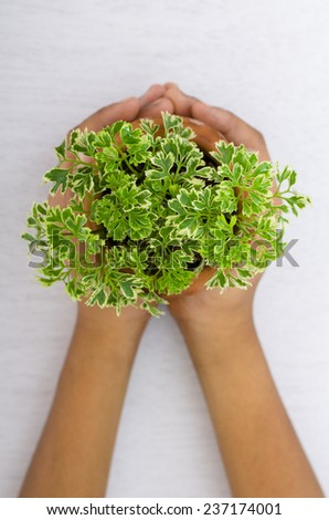 Hands and plant on white background - stock photo