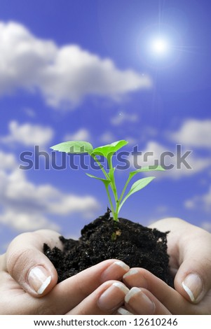 hands and seedling - stock photo