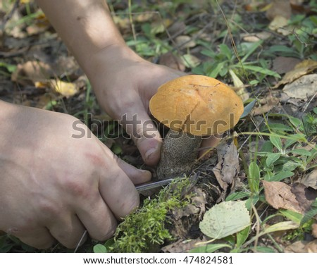 Hands cut the mushroom with a knife
