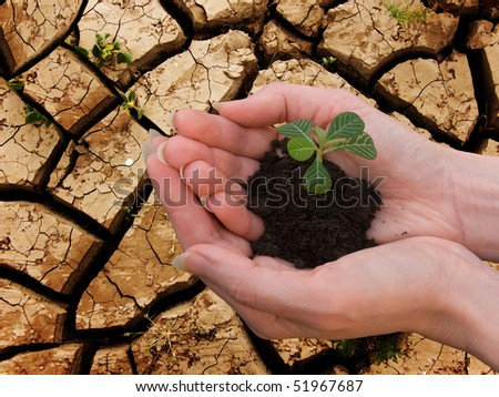 Hands  female   sprout   plant - stock photo