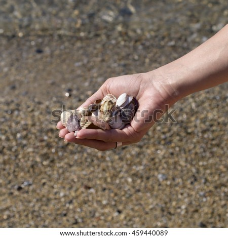 hands full of sea shells  on the shore