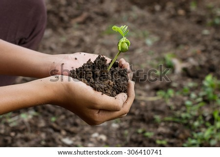 hands girl holding young plant. Ecology concept - stock photo