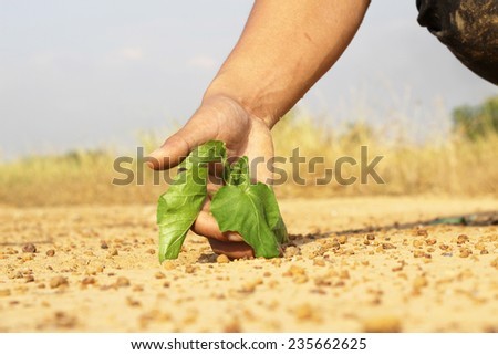 hands growing a tree growing on cracked earth - stock photo