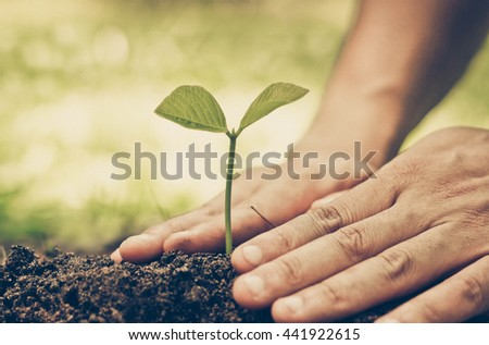 Hands growing a young plant / protect nature and environment concept - stock photo