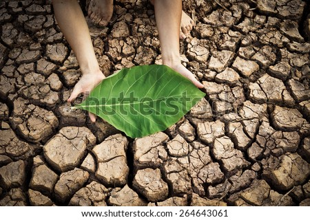 hands holding a big green leaf on dry and cracked ground / environmental destruction - stock photo