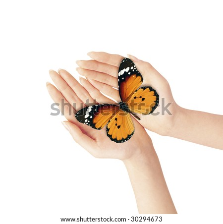 Hands holding a blue butterfly against a white background - stock photo