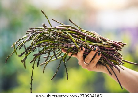 Hands holding a bunch of fresh asparagus on blurry background. Selected focus and shallow DOF - stock photo