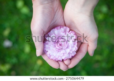 Hands holding a flower - stock photo