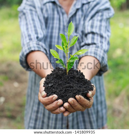 Hands holding a green young plant - stock photo