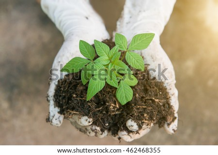 Hands holding a green young plant and light.