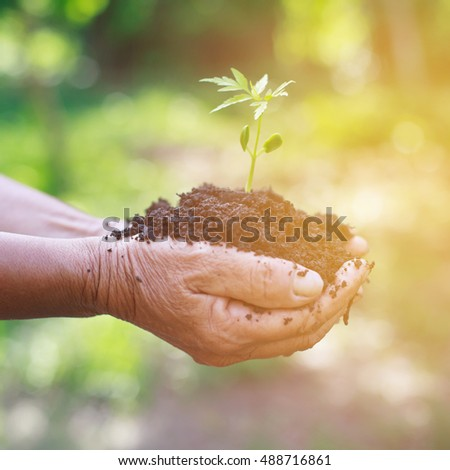 Hands holding a green young plant in morning.