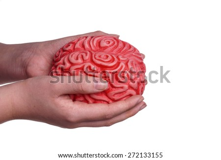 Hands holding a Human brain . They carry our knowledge forward and protect human main body for further development. Isolated on White with copy space - stock photo