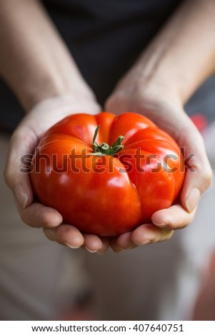 Hands holding a large, fresh tomato
