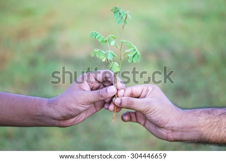 Hands holding a new tree on outdoor field - stock photo