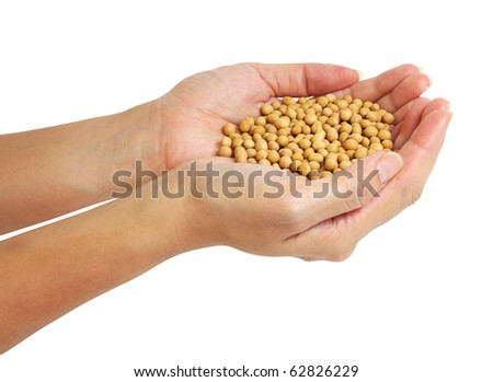 Hands holding a pile of soybeans on white background. - stock photo