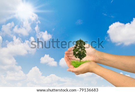 Hands holding a small tree on sky  background