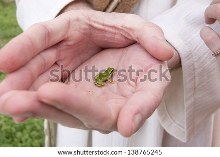 Hands holding a Tiny Green Frog - stock photo