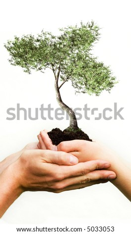 Hands Holding a Tree - stock photo