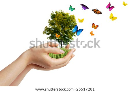 Hands holding a tree with butterflies - eco concept - stock photo