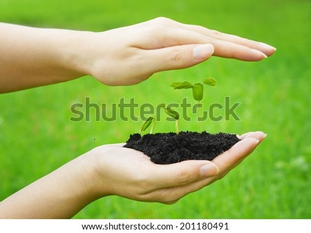 hands holding and caring a young green plant growing in a germination sequence on green background / planting tree / growing a tree / plant seedling