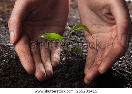hands holding and caring a young green plant in the rain - stock photo