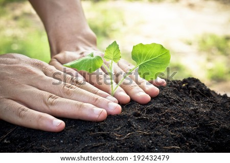 hands holding and caring a young green plant / planting tree / growing a tree / love nature / save the world - stock photo