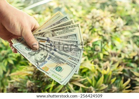 Hands holding cash money in front of marijuana plants