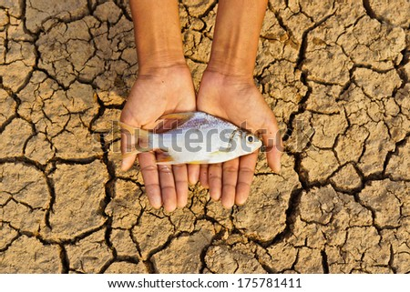 hands holding fish over dried cracked earth / save animal life / drought / river dried up / natural disaster / global warming - stock photo
