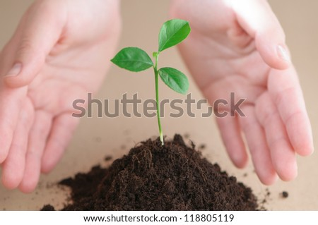 hands holding green plant