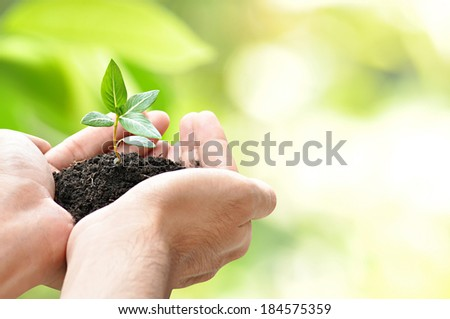 Hands holding green sapling - border design - with space for adding text - stock photo