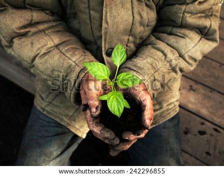Hands holding green sapling with soil. Gardener man - stock photo