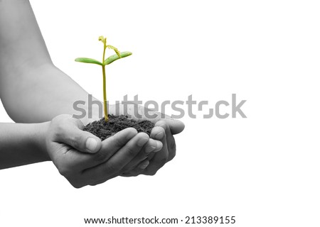 Hands holding green small plant (Business growth and new life concept) - stock photo