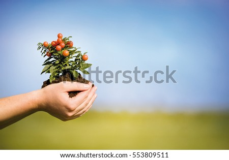 Hands holding growing plant, with green grass and blue sky on background