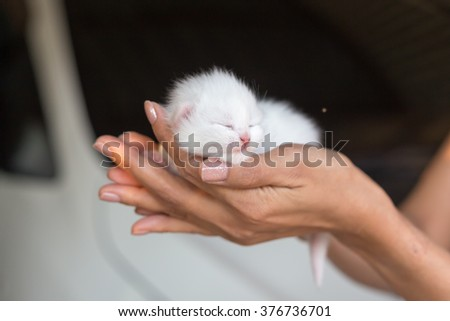 hands holding little kitten