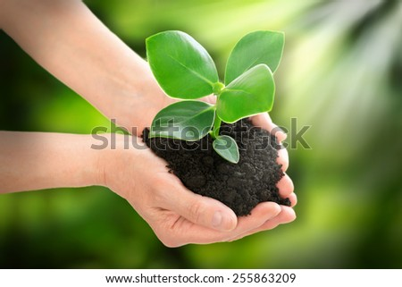 Hands holding plant ecology concept - stock photo