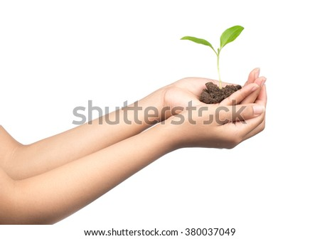 Hands holding sapling in soil isolated on white background