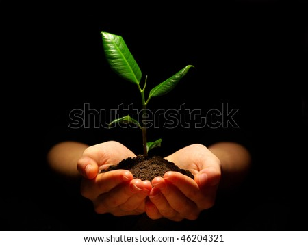 Hands holding sapling in soil on black - stock photo