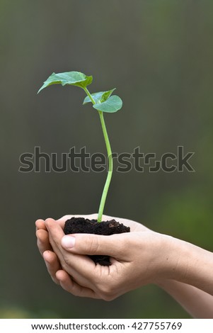 hands holding seedling of cucumber with soil - stock photo