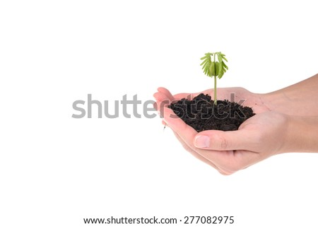 hands holding small young tree isolated on white background