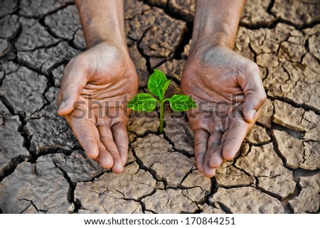hands holding tree growing on cracked earth /hands growing tree / save the world / environmental problems / cut tree - stock photo
