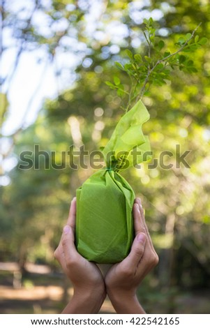 Hands holding vegetable. - stock photo