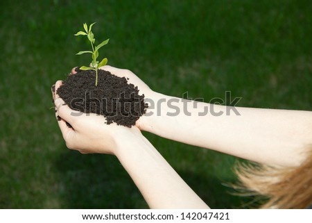 Hands holding young green plant, - stock photo