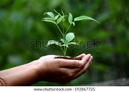 Hands holding young plant - stock photo