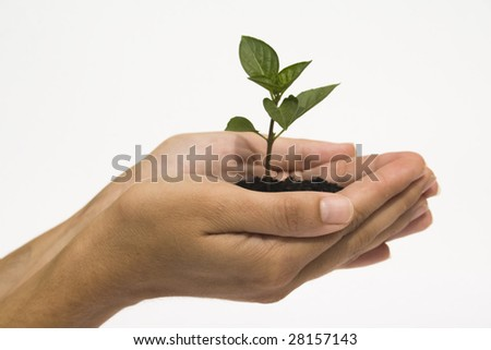 Hands holding young plant against white background