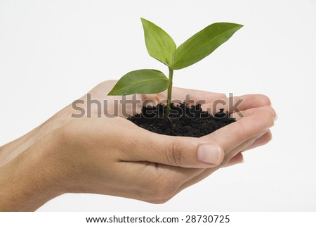 Hands holding young plant against white background - stock photo