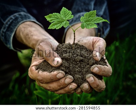 Hands holding young plant with soil - stock photo