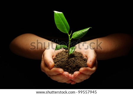 Hands holdings a little green plant - stock photo