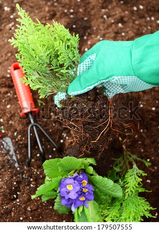 hands in gloves put plants into the soil